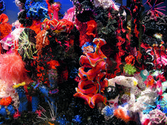 Institute For Figuring's Crochet Coral Reef project, 2005–ongoing. Foto…