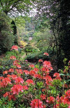 Leonardslee Gardens, West Sussex, England
