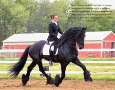 Friesian stallion Fridse 423 Sport loriannthwing