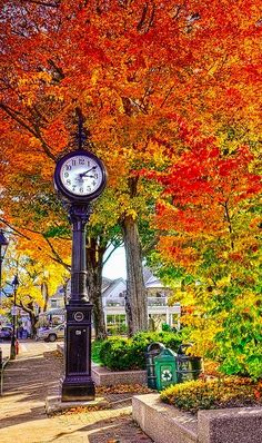 Beautiful Bar Harbor, Maine • photo: Kay Gaensler on Flickr. There is nothing like trees for fall color!
