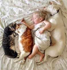 Animals Discover Archie is seen cuddling up to Nora while two of their cats also enjoy a snuggle on the bed Cute Funny Animals Funny Animal Pictures Cute Baby Animals Cute Cats Adorable Pictures Funny Cats The Animals Best Friends For Life I Love Cats Funny Animal Pictures, Cute Funny Animals, Cute Baby Animals, Cute Cats, Cute Pictures, Funny Cats, Smiling Animals, So Cute Baby, Cute Babies