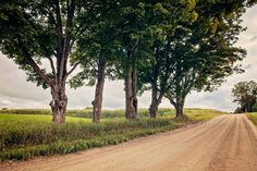 Rustic Trees Photographic Print Fine Art by agerhardtphotography, $5.00