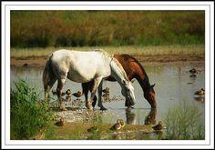 Hace poco me decidí a adquirir mi primer caballo. He conseguido un lugar donde cuiden de él durante la semana, tanto desde el punto de vista de alimentación como de ejercicio y al que puedo acceder en todo momento para montarlo, pasear y disfrutar con él.