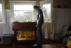 Gardeners Grow Dinner With Aquaponics - Home - Staple News