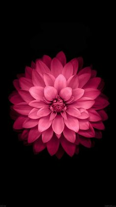 #Iphone #Flower