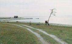 Sacrifice -  Tarkovsky