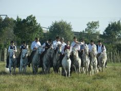#camargue #horse En savoir plus sur les chevaux de camargue : http://www.chevalcamargue.fr/