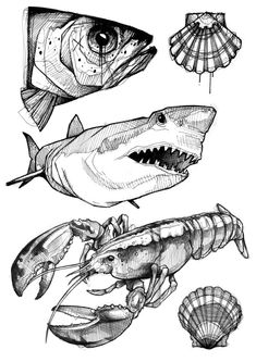 Pencil Drawings Of Animals, Fish Drawings, Animal Sketches, Art Drawings, Fish Pencil Drawing, Lion Drawing, Art And Illustration, Ink Illustrations, Tattoo Sketches