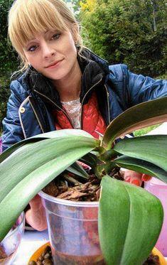 Elżbieta Smolińska przesadza storczyki Orchid Care, House Plants, Watermelon, Salons, Fruit, Flowers, Gardening, Decor, Cactus