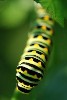 12x18 vivid Caterpillar glossy print by Ulianasmoments on Etsy, $20.00