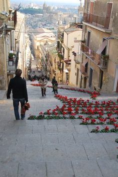 #Sicily - with #cyclamens growing in the street. #lcaltagirone #sicilia #sicily