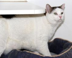 My name is Precious. I am very, very friendly and I love to be cuddled. I am on a diet because I love treats very much. I hope my new family finds me real soon. Come visit me today at HSMC: 2515 14th Street West Bradenton, Florida 34205 Or call: (941) 747-8808 x313 #shelter #dogs #animals #HumaneSociety #Florida #HSMC