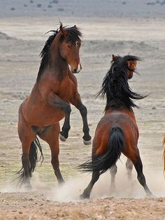 Onaqui Wild Horse Man. Area by fred h, via Flickr