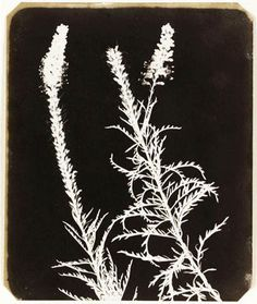 William Henry Fox Talbot - would make nice embroidery
