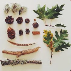 Nature finds we brought from last weekend's trip to Vinhais Biologic Park