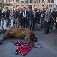 Il sindaco Raggi ha promesso l'abolizione delle botticelle, ma l'assessore Berdini ha annunciato l'apertura di nuove stalle a Villa Borghese