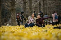 Visitors enjoy autumnal scenery on Nami Island in Chuncheon, Gangwon Province on Thursday. Nami Island Autumn, Chuncheon, Scenery, November, Korea, Landscape, Landscapes, Lugares