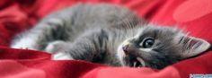 cat lying facebook cover