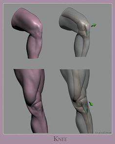 Wrapping up my first study of this new series on anatomy.  When sculpting or drawing the knees, focus on the bone landmarks and structure…