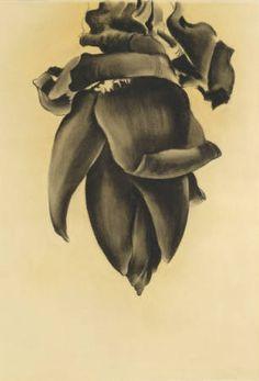 """""""Banana Flower No. II,"""" Georgia O'Keeffe, 1934, charcoal on paper, 21 7/8 x 14 1/2"""", Georgia O'Keeffe Museum."""