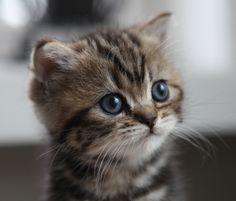 [フリー画像] 動物, 哺乳類, ネコ科, 猫・ネコ, 子猫・小猫, 201009101100 - GATAG|フリー画像・写真素材集 2.0