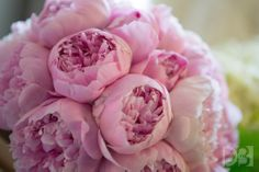 Bridal bouquet of pink peonies at the Fairmont Copley Plaza, Boston, MA. www.davidbarnesphotography.com