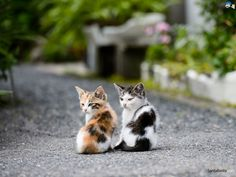 Free HD Cats Wallpapers - http://whatstrendingonline.com/free-hd-cats-wallpapers/