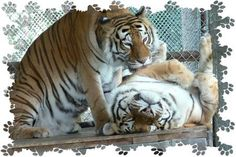 In-Sync Exotics Wildlife Rescue and Education Center  Excellent Rescue Center!!!  Colleen was a volunteer here
