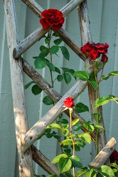 Outdoors Discover Ideas Wood House Structure Rustic For 2019 Rose Trellis Diy Trellis Garden Trellis Garden Fencing Garden Yard Ideas Garden Crafts Garden Projects Garden Art Vertikal Garden Garden Yard Ideas, Garden Crafts, Garden Projects, Garden Art, Garden Design, Diy Crafts, Rose Trellis, Diy Trellis, Garden Trellis