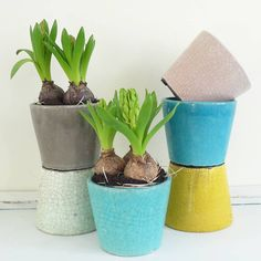 Assorted colour set of six crackle glaze pot planters for home.Lovely colourful rustic style crackle glaze planter pots sold as a set of six in assorted colours. The colours in each set are off-white, taupe, pale pink, sunshine yellow, aqua and turquoise. These pots are a perfect way to to display potted plants like succulents, bulbs and other smaller plants in the home. Each pot has small rubber feet. Please note the pots have a rustic glazed finish. Imperfections are part of the finish and…