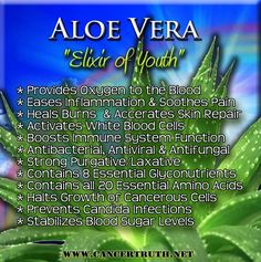 Herbs and spices to include in a paleo diet aloe vera