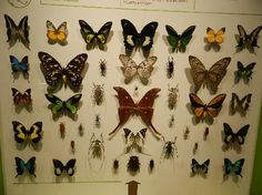 Photos of Montreal Insectarium
