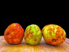 Jujube Fruits (Red Dates): About and How to Eat: paleo recipes, dessert recipes and more
