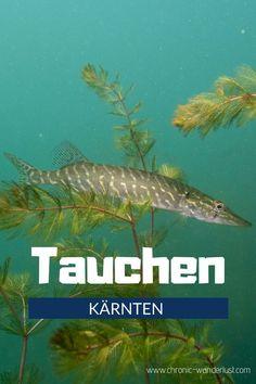 Einmal abtauchen in Kärnten, bitte! In diesem Blogpost verrate ich dir 5 tolle Seen in Kärnten, die du unbedingt sehen musst! #Tauchen #Österreich #Kärnten