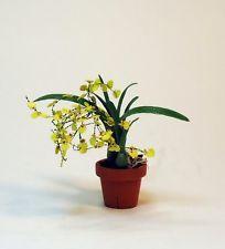 dollhouse miniature 1/12th scale oncidium orchid