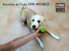 My dog fav biscuits. 100% NATURAL Pear biscuits. https://www.facebook.com/StreatBiscuits