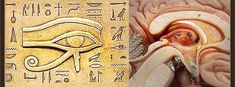 OurWonderlife | De-Calcify the Pineal Gland – Our Eye of Horus