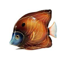 """Bubbles"" Fish"