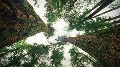 """""""A forest is much more than what you see,"""" says ecologist Suzanne Simard. Her 30 years of research in Canadian forests have led to an astounding discovery -- trees talk, often and over vast distances. Learn more about the harmonious yet complicated social lives of trees and prepare to see the natural world with new eyes."""