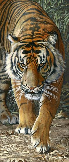 Tiger Walkin - wildlife painting by Scot Storm