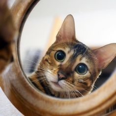 Mirror mirror tell me who is the most #beautiful in the world?  simbathebengal.com