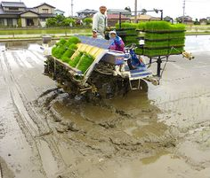 Japanese husband and wife working in the family business. www.toursgallery.com Planting Rice.