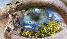 Resultados de la Búsqueda de imágenes de Google de http://www.ecologistasenaccion.org/IMG/jpg/ojo_naturaleza_web.jpg
