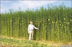 Anchorage senator proposes hemp as agricultural crop   http://www.newsminer.com/news/alaska_news/anchorage-senator-proposes-hemp-as-agricultural-crop/article_212f0598-9b59-11e4-977c-3366dd2620af.html#.VLWHPHjU4KU.twitter … #hemp #biofuel #food #medicine #cbd