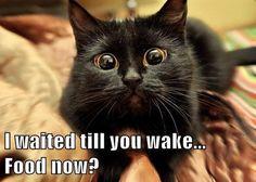 ~<3~ - Cat memes - kitty cat humor funny joke gato chat captions feline laugh