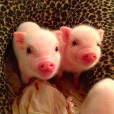 Happy National Pig Day! http://on.mash.to/1E6ttga