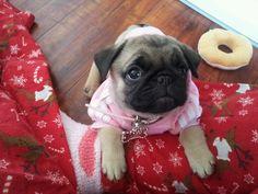 Pug sweet!