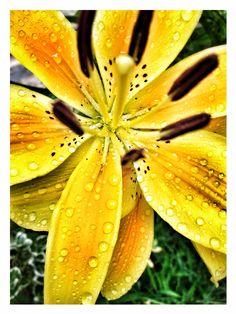 Summer lilies by Mark Pizza, via Behance