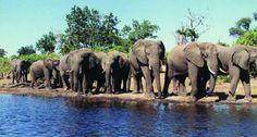 The Addo National Park, Port Elizabeth