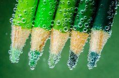 still life photography green pencils under water